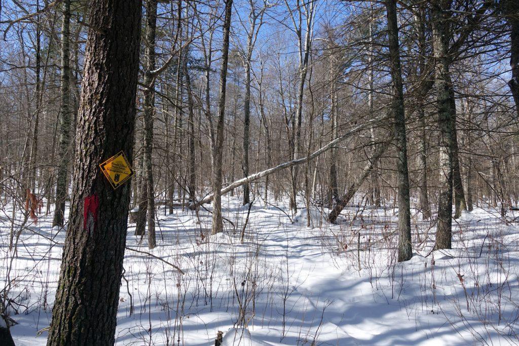 snowy trail leading into RI DEM land