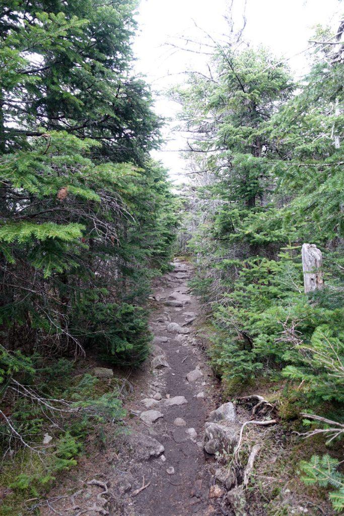 Treeline trail near Greenleaf.